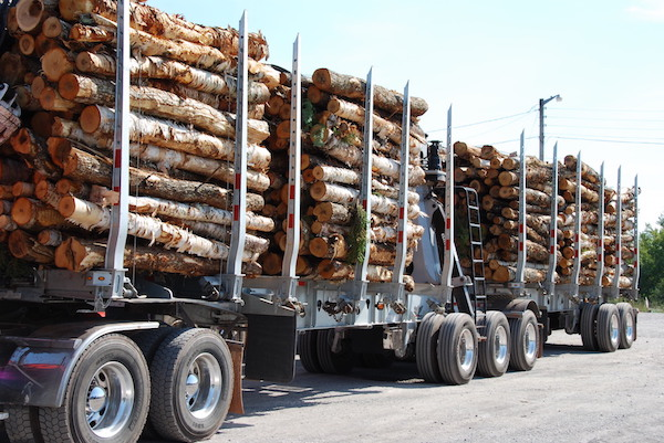 Pulp logs on a truck