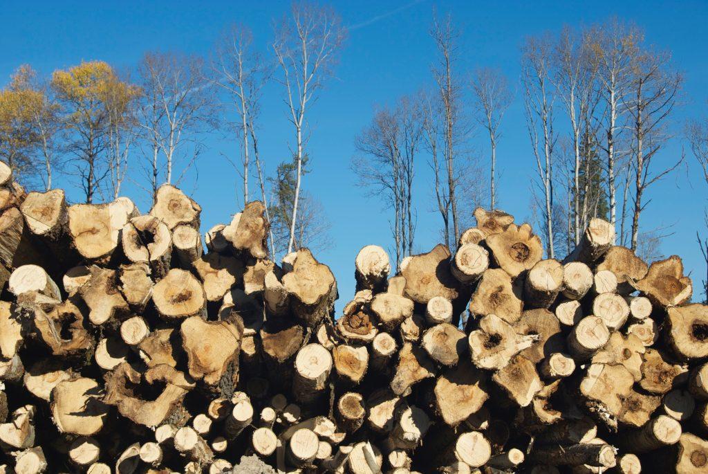 Alberta pulp wood