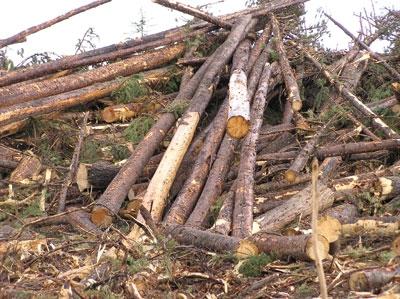 FESBC slash pile