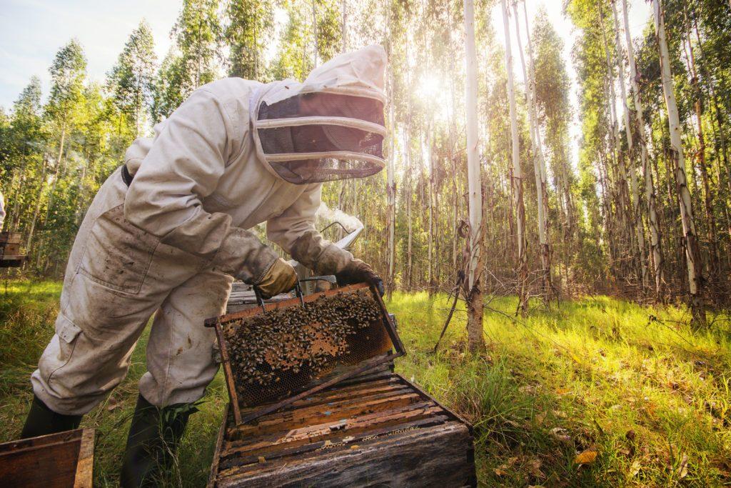 Sustainable eucalyptus plantations: Ensuring natural biodiversity. Photo: UPM/Informa Markets