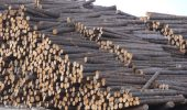 Photo: Canadian Forest Industries