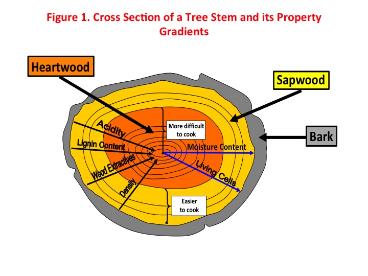 Figure 1: Cross-section of a tree stem and its property gradients. Photo: Augusto Quinde