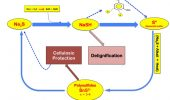 Figure 1. Sulfur compound transformations during kraft pulping
